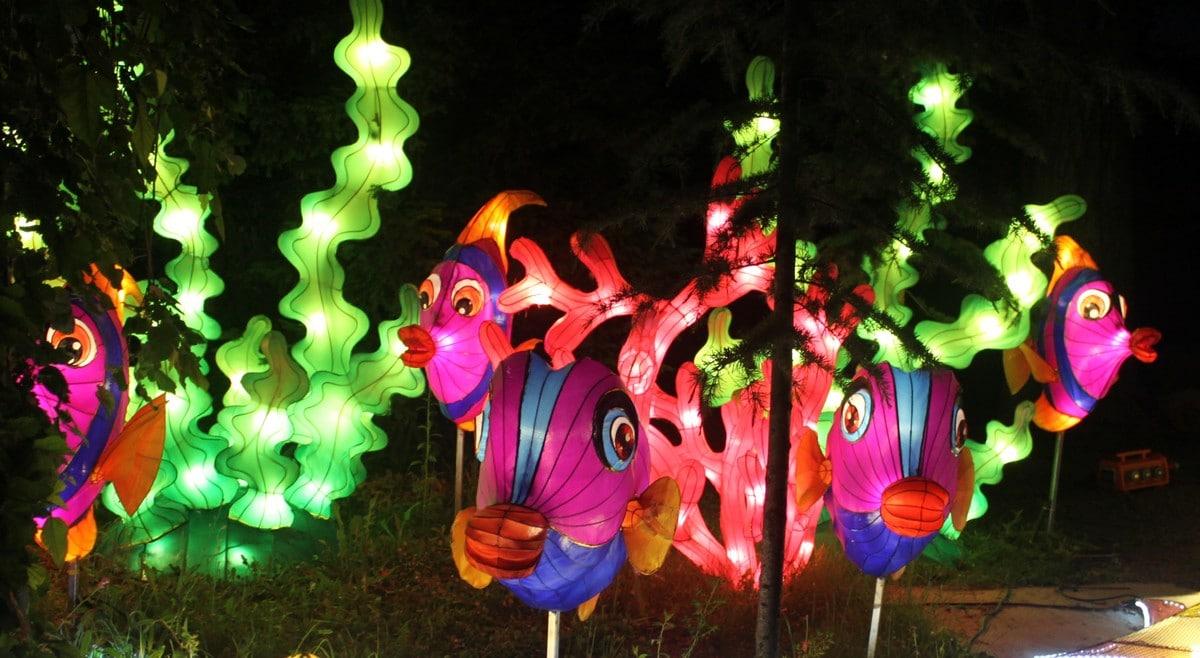 Spennende lys i dyreparken i Budapest